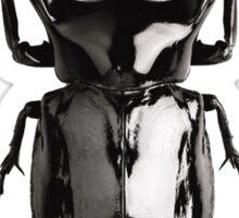 Black beetle Sticker