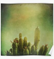 Cactus in my mind Poster