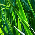 Eight Grades of Green by PictureNZ