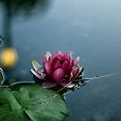 The Lily And The Lantern by bilyana