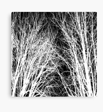 Comely trees 1 Canvas Print