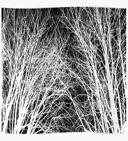 Comely trees 1 Poster