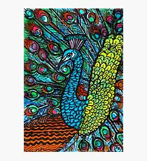 Peacock - Kerry Beazley Photographic Print