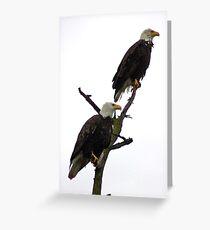 bald eagle pair in the rain Greeting Card