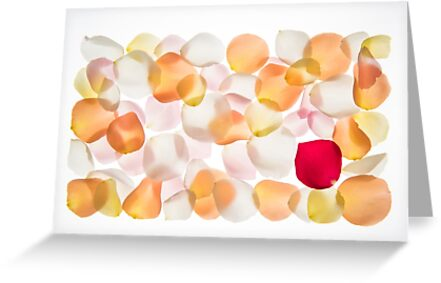 Back lit Flower petals photographed on a light box by PhotoStock-Isra