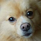 Puppy Dog Eyes by milwaukelly