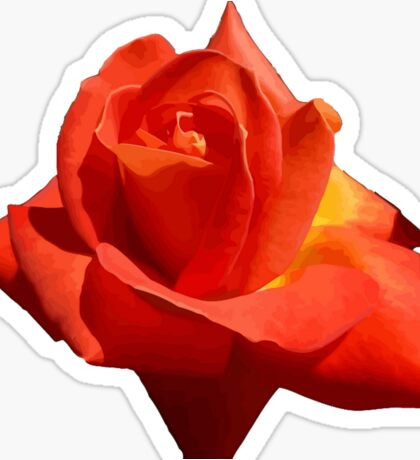 Beautiful Red Rose Photograph Vector Sticker