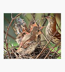 Hey kids i brought home a delicious dinner tonight ! Photographic Print