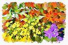 Floral Rainbow by PhotosByHealy