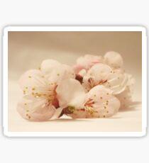 Flori de corcodus Sticker