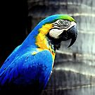 Profile of a Blue & Gold Macaw by LjMaxx