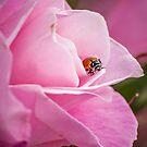 Pink Lady by Tamara Mason
