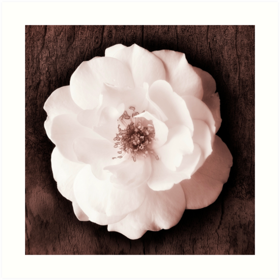 ab4a7c562a0 White Roses Flowers Tree Flower Garden Rose Black Background