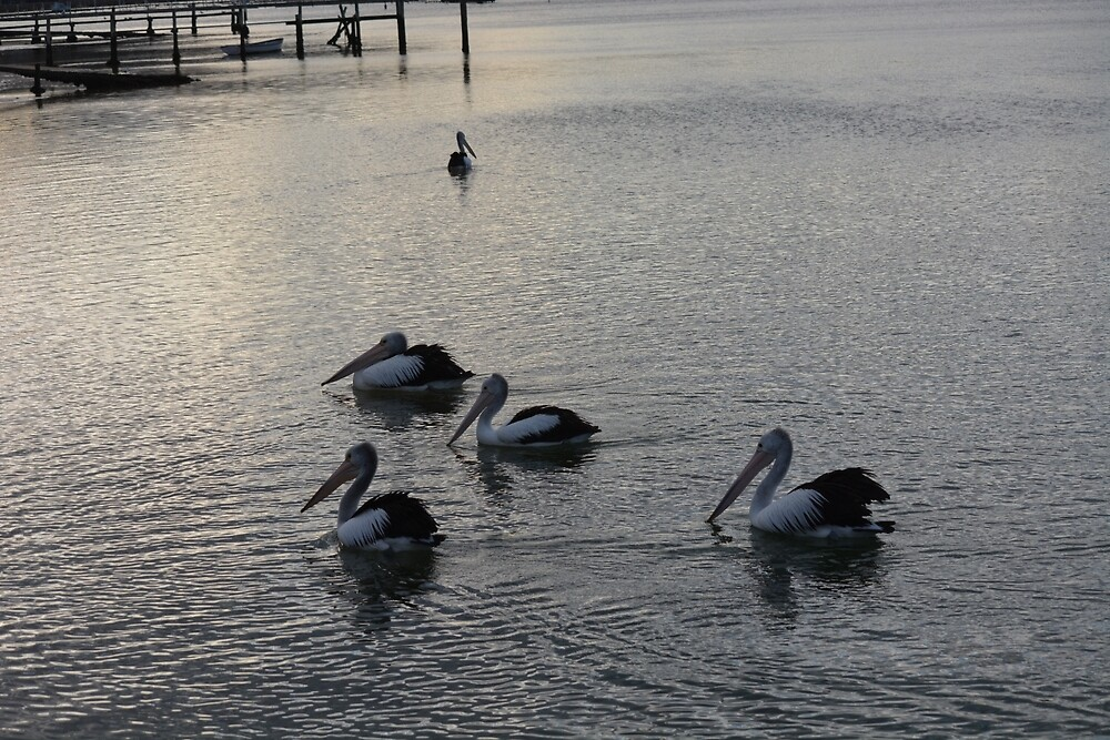 Pelicans hanging out  by Kerryn Wood