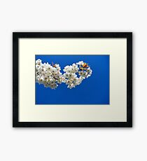 Cherry Blossom Branch Framed Print