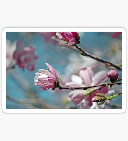 Sugar Magnolia Sticker