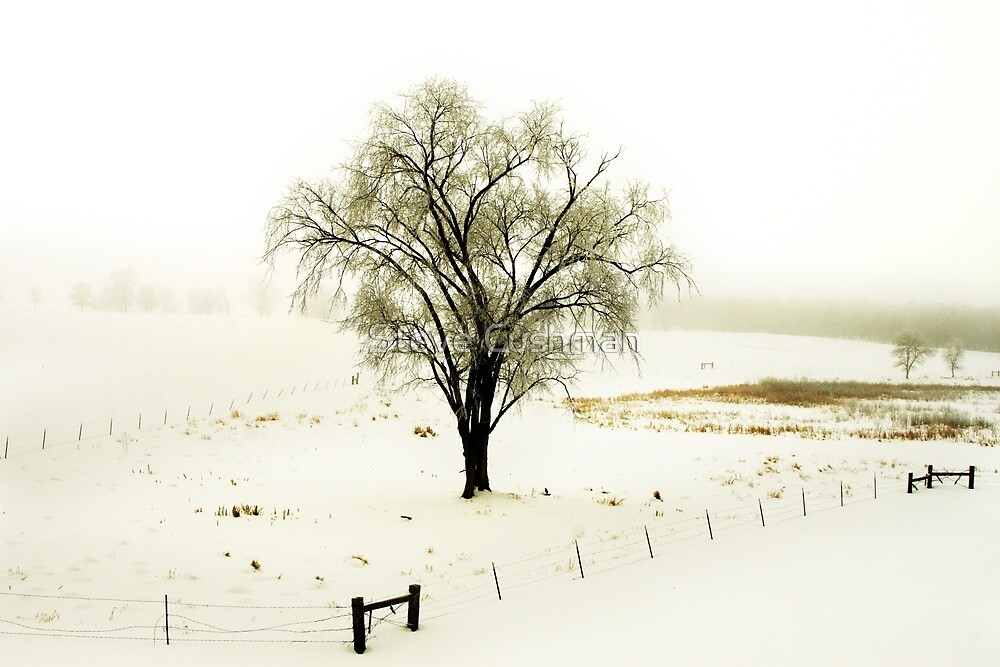 Solo Tree In a Minnesota pasture by Cushman
