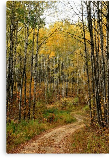Trail in Minnesota Forest in Fall by Cushman