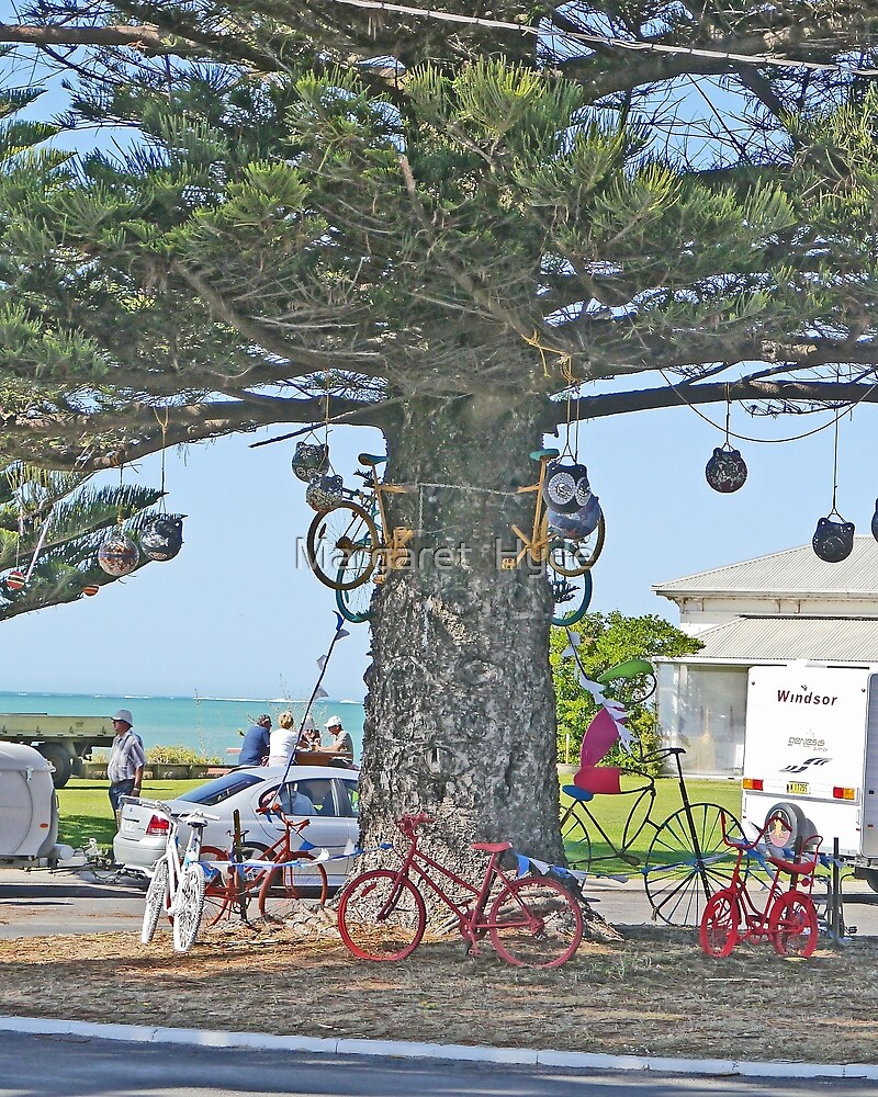 Bicycle tree, Beachport, South Australia by Margaret  Hyde