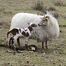 Proud Mother Sheep by ienemien