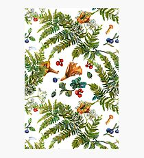 Forest ferns, berries and mushrooms Photographic Print