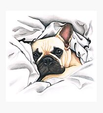 french bulldog - @MiudaFrenchie Photographic Print