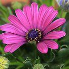 Purple bloom macro by RosiLorz