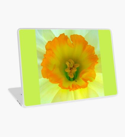 Daffodil close-up with visitor Laptop Skin