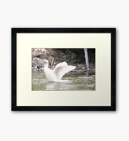 White Female Duck Framed Print