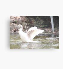White Female Duck Metal Print