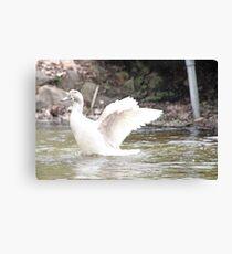 White Female Duck Canvas Print