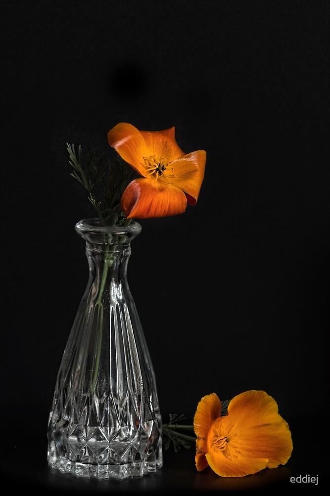 California poppy by eddiej