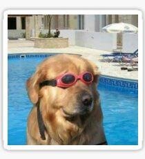 Swimming Pupper Sticker