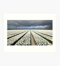 Tulips before the storm Art Print