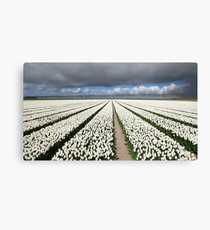 Tulips before the storm Canvas Print
