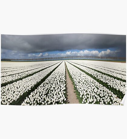 Tulips before the storm Poster