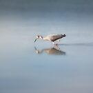 Wading Bird by Linda Cutche