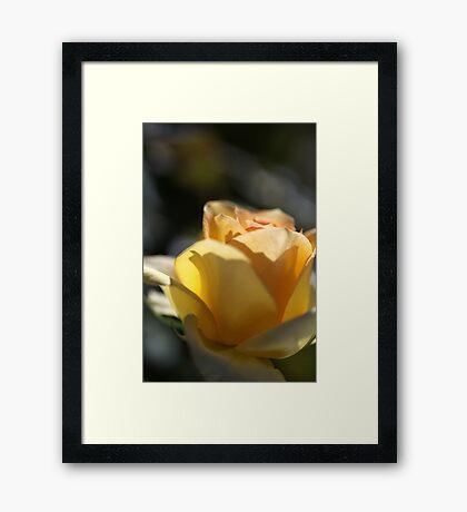 Rose Remember When Framed Print