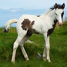 Foal on Bodmin Moor by Kawka
