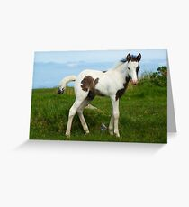 Foal on Bodmin Moor Greeting Card