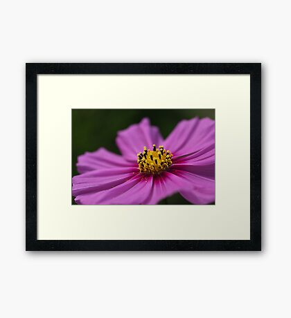 Pink Wish Framed Print
