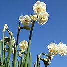 Narcissus Bridal Crown by ienemien