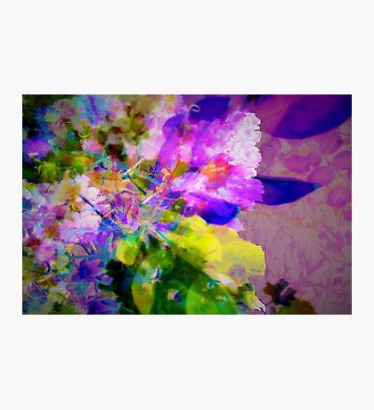 Delicate Crape-myrtle Photographic Print