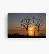 Three Trees and the Sun Canvas Print