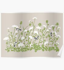 Queen Anne Lace Poster