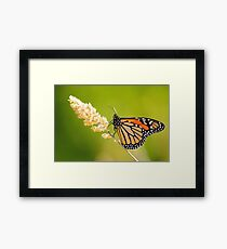 A Place To Rest Framed Print
