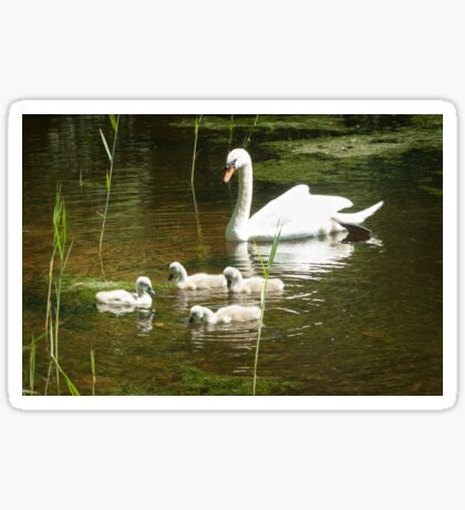 Mother swan and her little ones Sticker