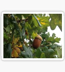 Acorn on autumn tree Sticker