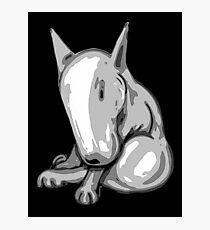 Bashful English Bull Terrier Photographic Print