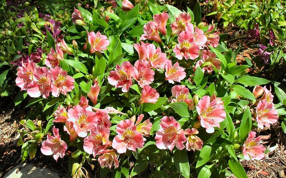 Lovely flower garden by donnagrayson